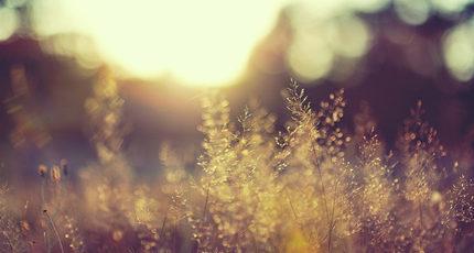 你的眼,是我此生再也遇不到的温暖阳光