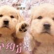 日本电影《十个约定》高清免费在线观看