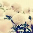 五月的野蔷薇