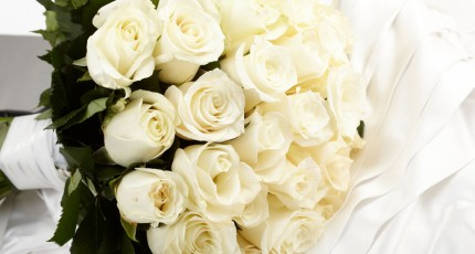 献给浅川樱的最后一束白玫瑰