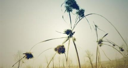 繁花似锦春日里的固定幸福
