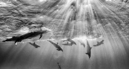 【自在世界】如何遇见一头海豚
