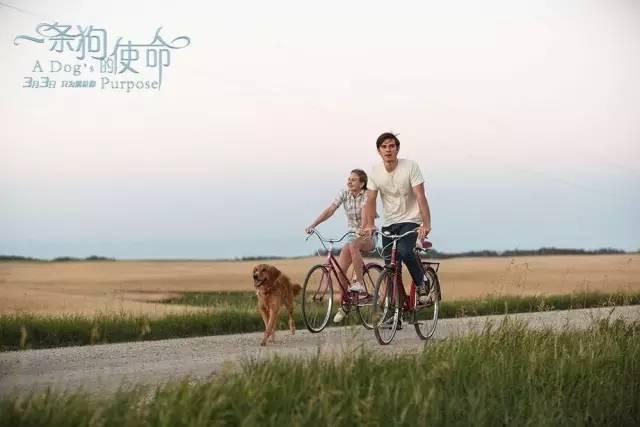 《一条狗的使命》影评:我会一直陪你,我会一直在