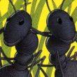 儿童睡前有声绘本故事《两只坏蚂蚁》在线收听